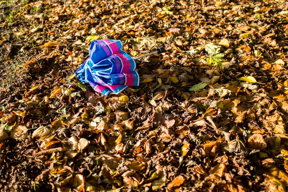 Autumn in Allerton - Abandoned Umbrella, Calderstones Park