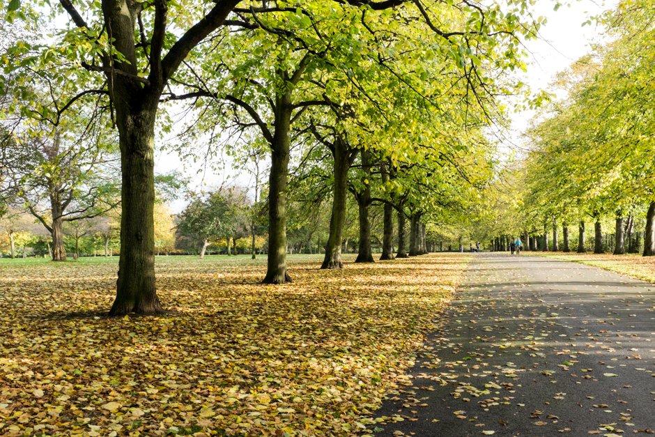 Autumn in Allerton - Calderstones Park