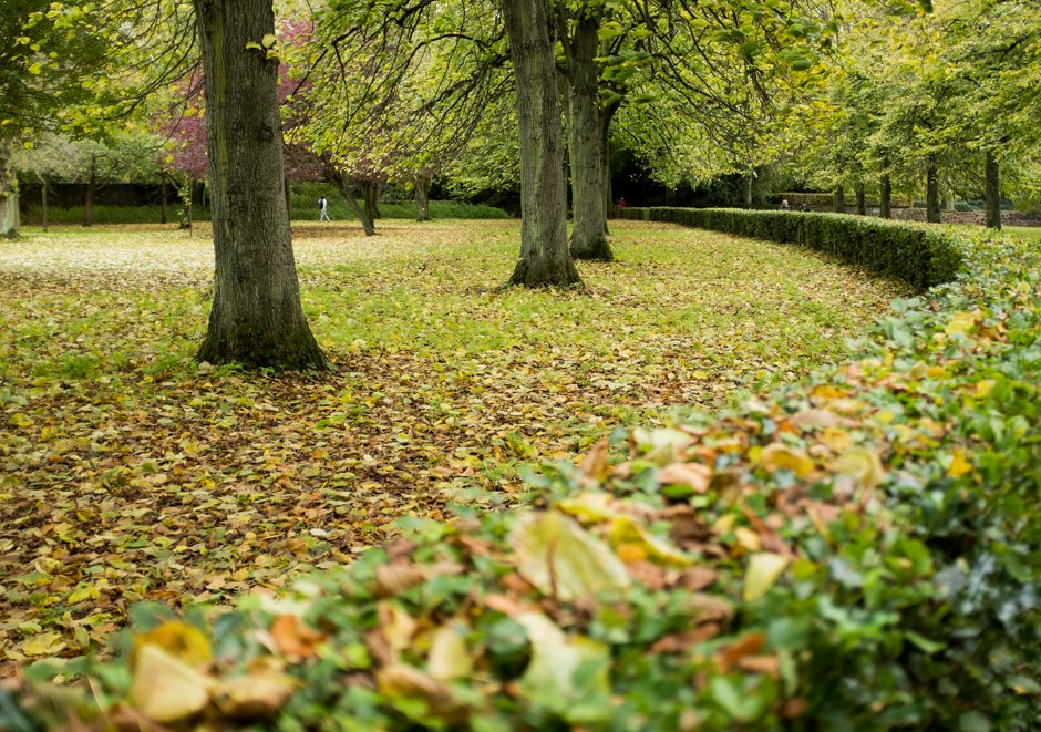 Autumn in Allerton - Hedge Curve, Calderstones Park