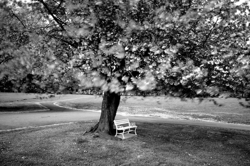 White bench in cemetery under large tree, black and white shot, Liverpool