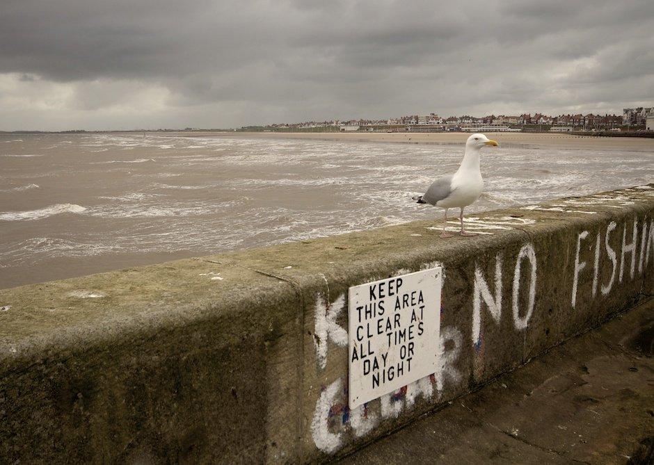 Bridlington Docks - Disobedient Seagull