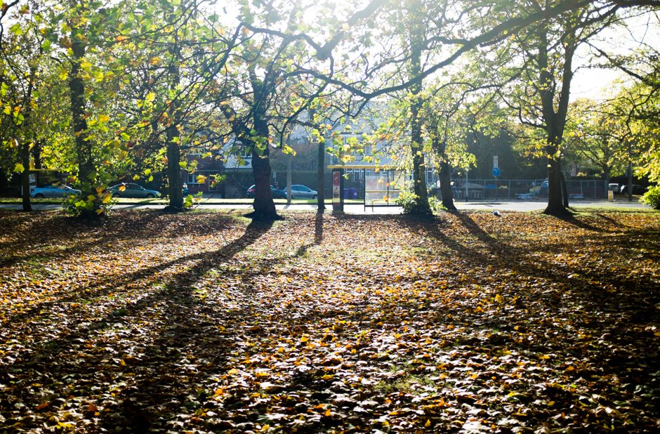 Autumn in Allerton - Bus Stop, Menlove Avenue